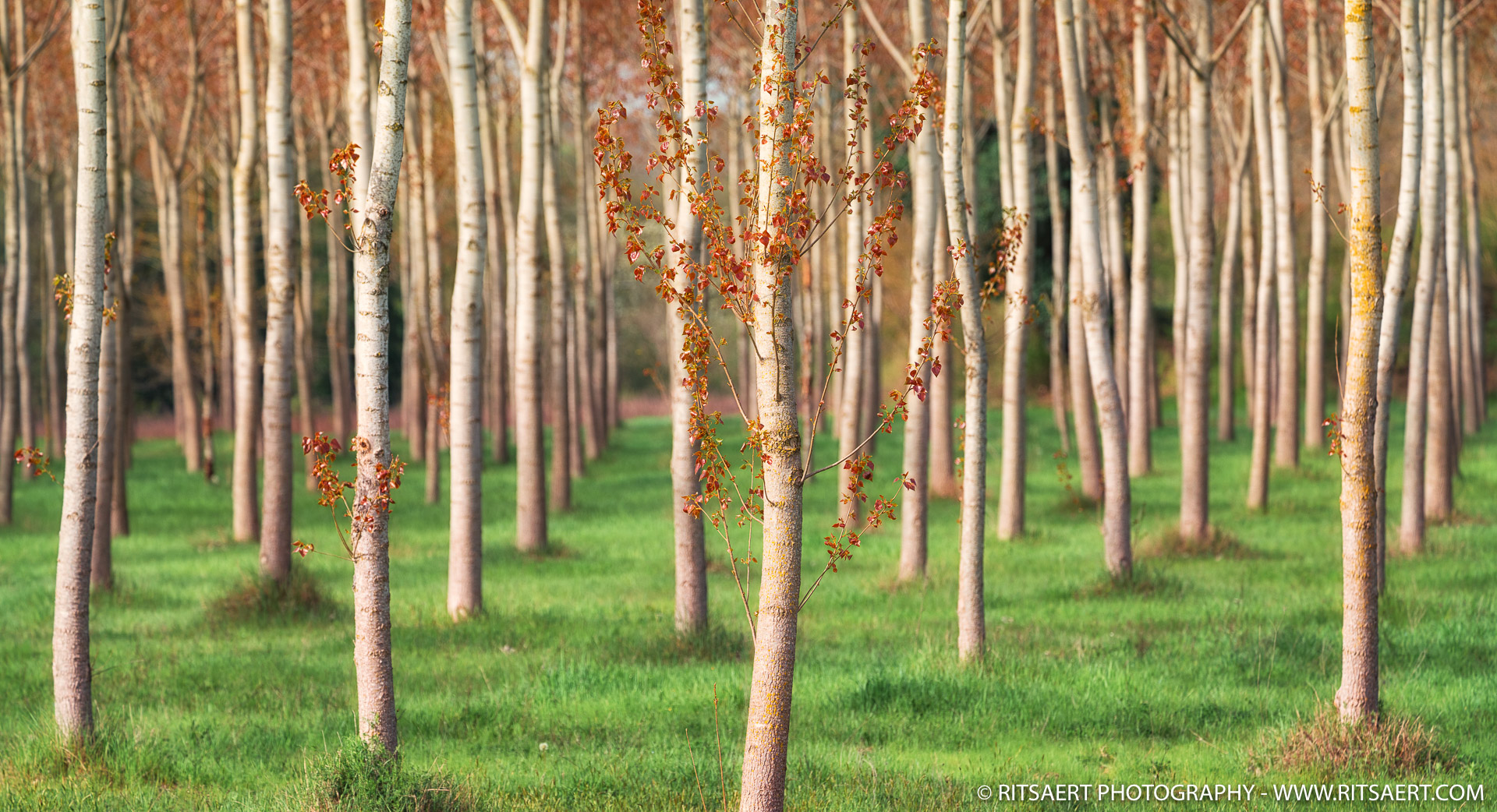 A forest of trees - Tuscany - Italy
