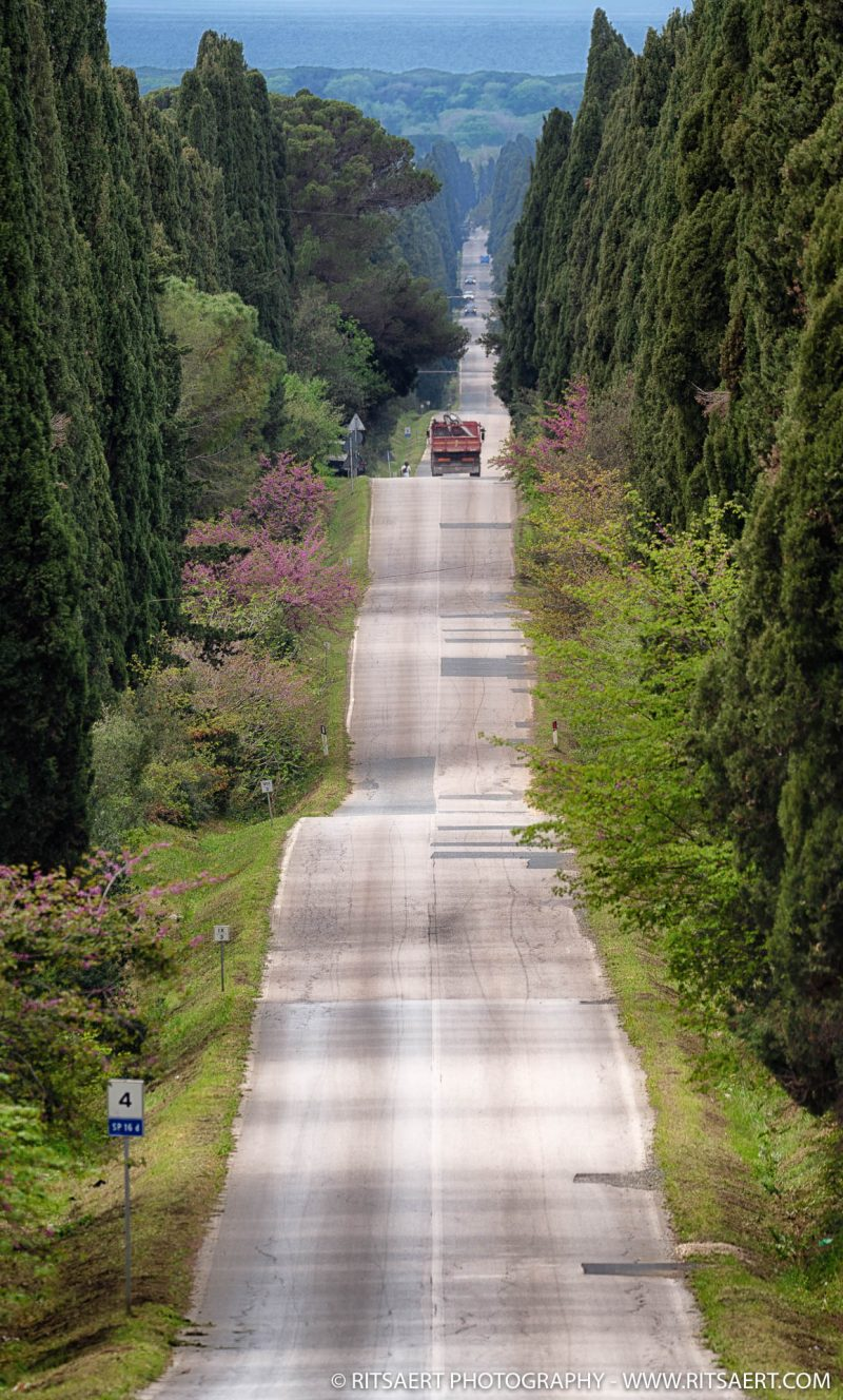 Road from Bolgheri - Tuscany - Italy
